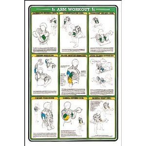 arm workout fitness chart sports  outdoors  arm workout