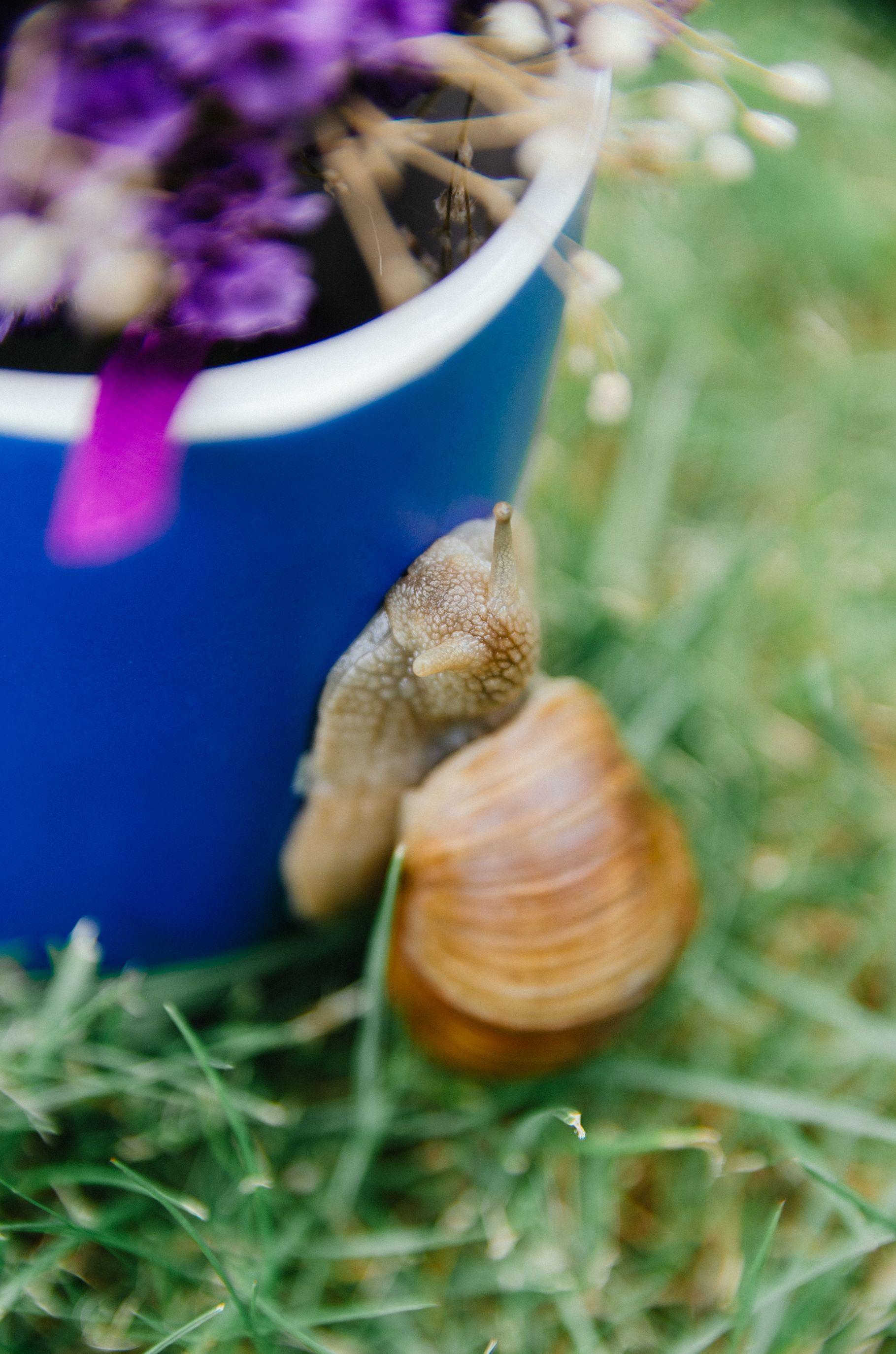 WHAT DO GARDENS SNAILS EAT? Garden snails (Helix Pomatia