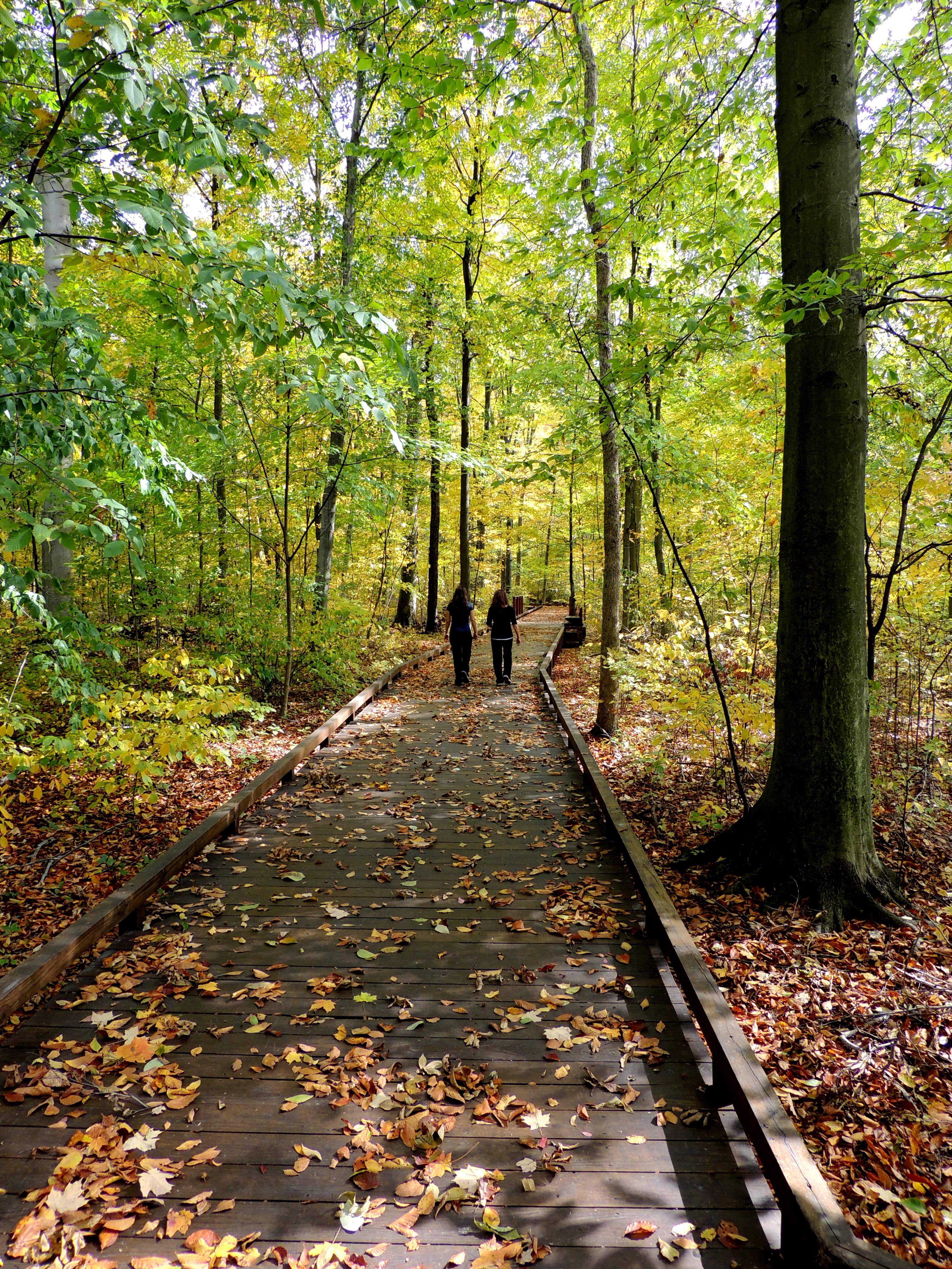 Inniswood Metro Gardens, Westerville, OH | Places I\'ve Been that ...