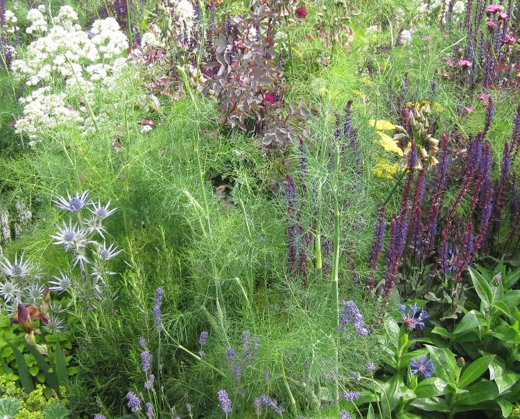 Ecco una guida completa su come potare le #piante [da #frutto e da #fiore] se...