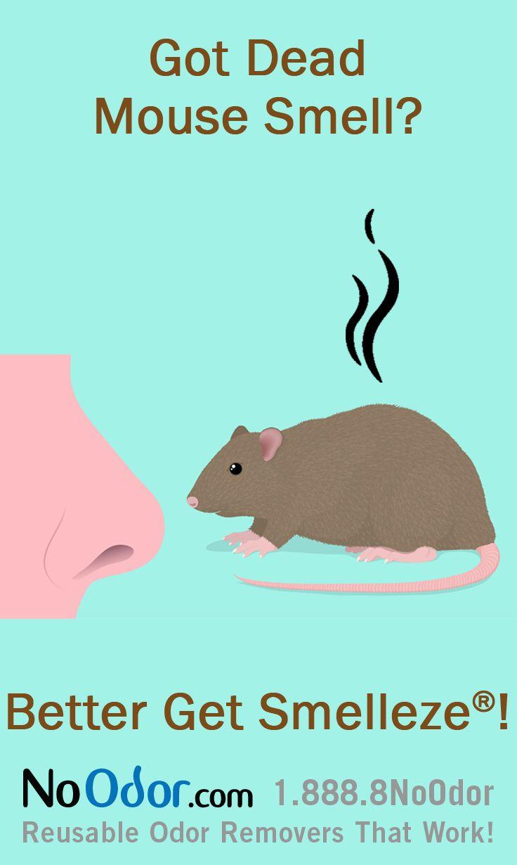 Pin by Sophia Harrington on Smelly Dead Animal Odor
