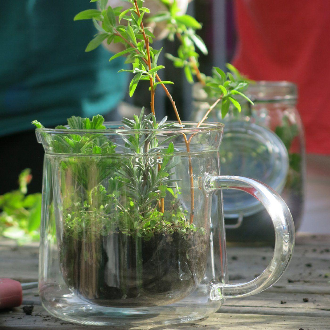 Jardinage: faites pousser vos propres boutures!