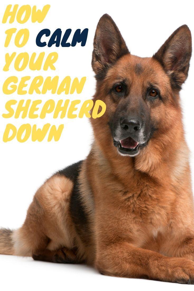 How to calm your german shepherd down german shepherd