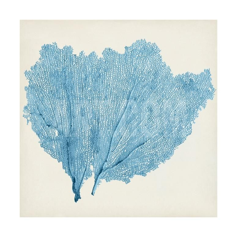 Sea Fan IVBy Vision Studio is part of Cool Home Accessories Wall Art -