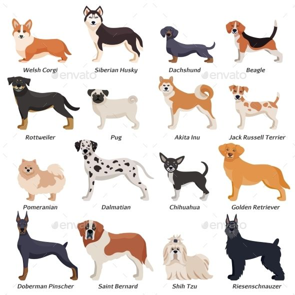 Purebred Dog Breeds With Pictures