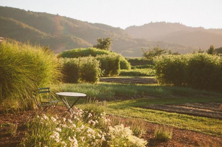 The French Laundry's edible garden