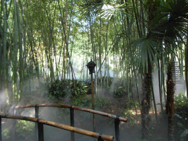 Bamboo Garden Design bamboo garden design for asian landscaping concept ideas home Bamboo Garden Design Ideas Zen Garden Ideas Bridge Babmoo Trees