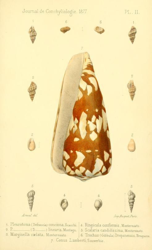t 25 (1877) - Journal de conchyliologie. - Biodiversity Heritage Library