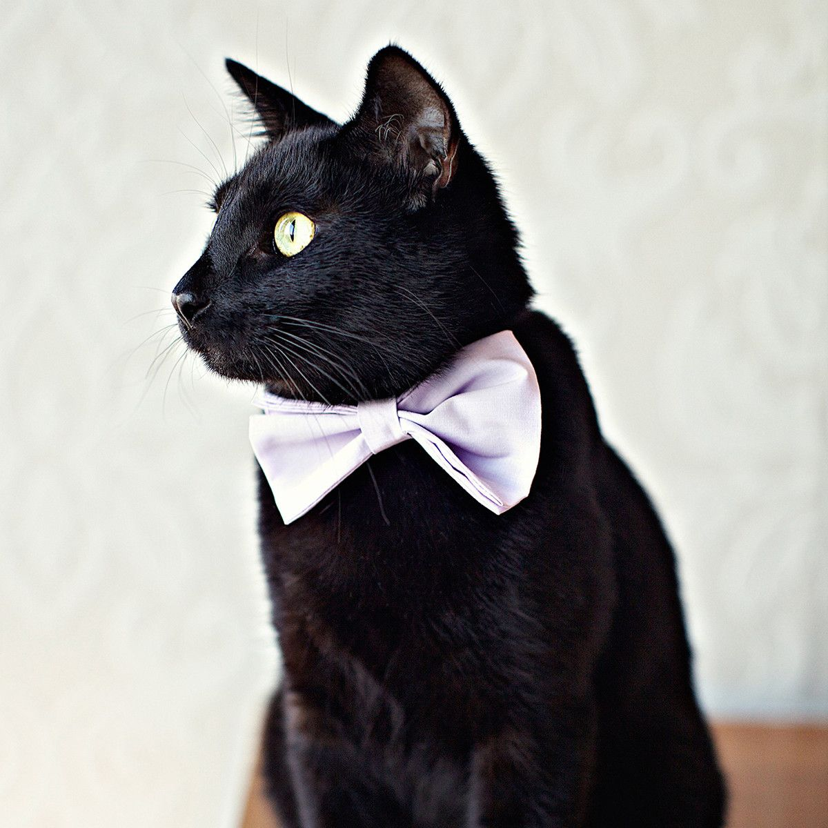 Fab com   Rover Cat Bow Tie $16 00 I need this for Pippin!   For the