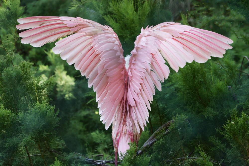 мясную крыло птицы фотографии глубокую