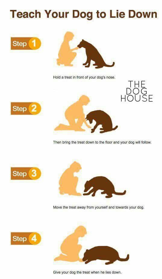 Simple Way To Teach Your Dog To Lie Down Puppy Training Tips
