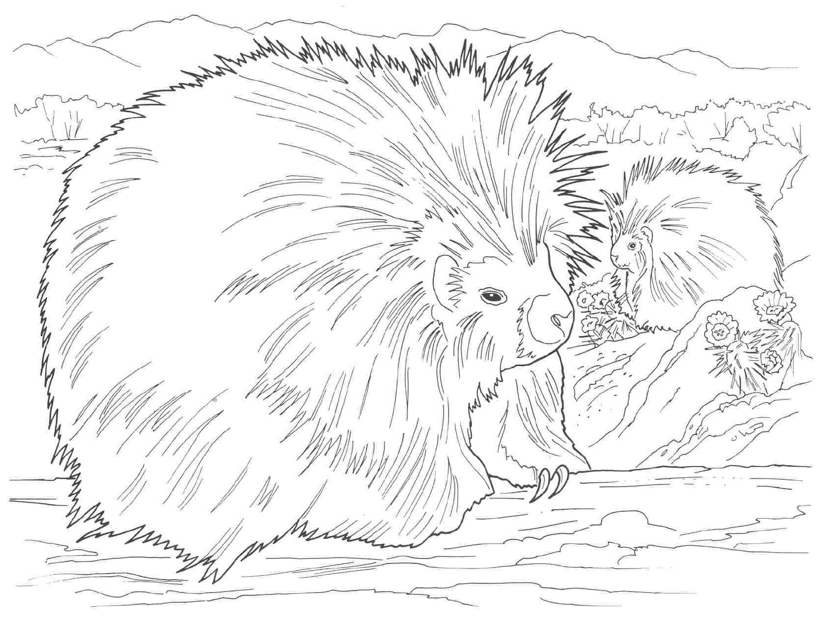 coloring pages for adults realistic animals - Google Search ...