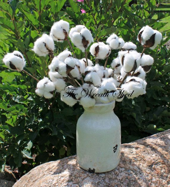 "SHIPS FREE, 5 - 12"" Natural Cotton Stems, Natural Cotton Bolls, Wedding Decor, 2nd Anniversary Gifts, Raw Cotton Branches, Cotton Home Decor"