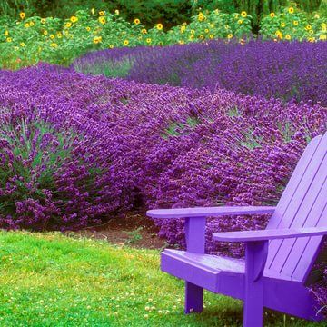 9 plants that bug bugs —including mosquitoes - Story