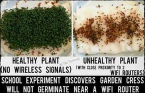 9th Grade Student Cress Wifi Experiment Attracts International
