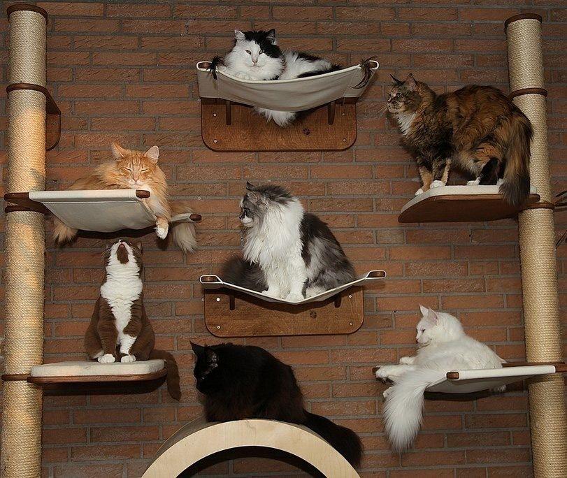 подступах центру много животных дома приколы картинки для