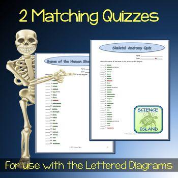 Skeletal System Diagrams Study Label Quiz Color Diagram