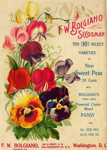 garden seed catalogs. Pansies And Sweet Peas, Bolgiano\u0027s New Century Catalogue 1901 : Garden Seed Catalogs R