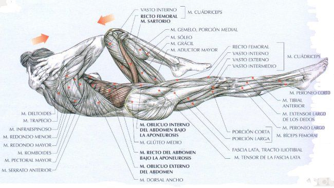 Guía de ejercicios abdominales (XI): Ciclista u oblicuos alternos en ...