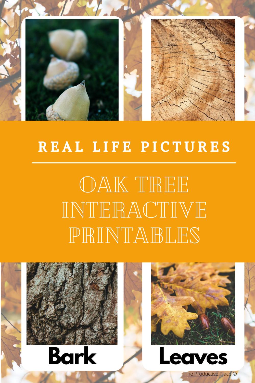 Oak Tree Anatomy Parts Of The Oak Tree Worksheets For Kids Teachers Pay Teachers Seller Halloween Resources [ 1500 x 1000 Pixel ]