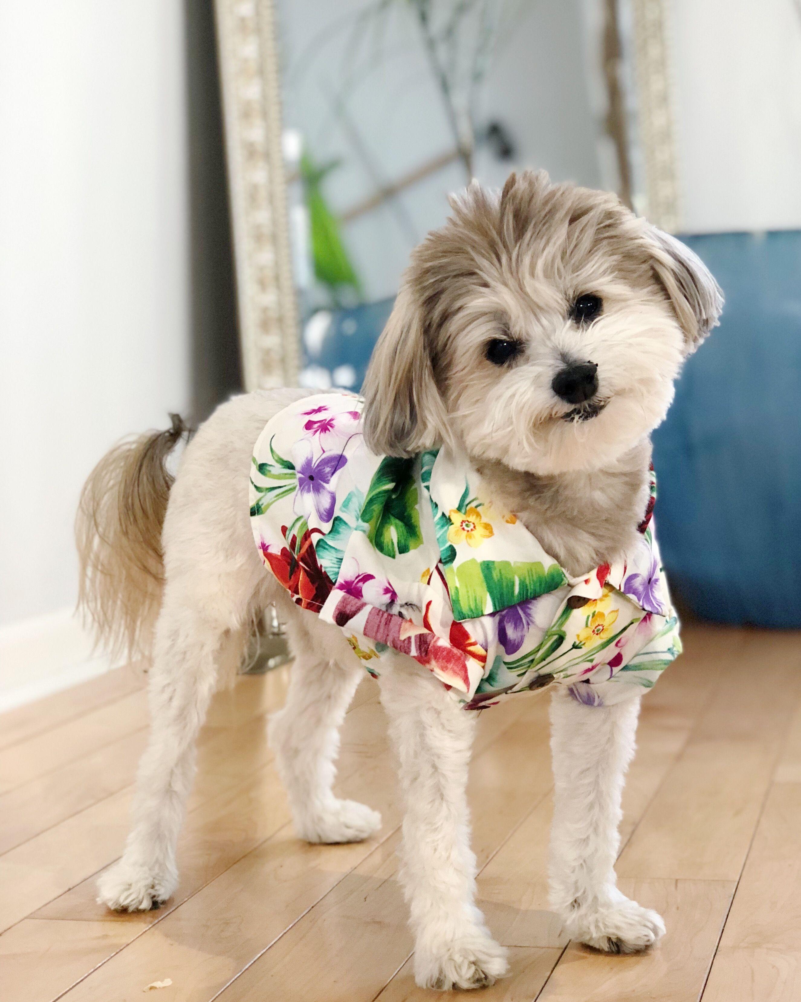 Dogs In Clothes Modern Dog Hawaiian Dog Shirt Fashion For Dogs By Dog Threads Stylish Dog Clothes Cute Dog Clothes Dog Clothes Cute Dogs Cute Dog Clothes