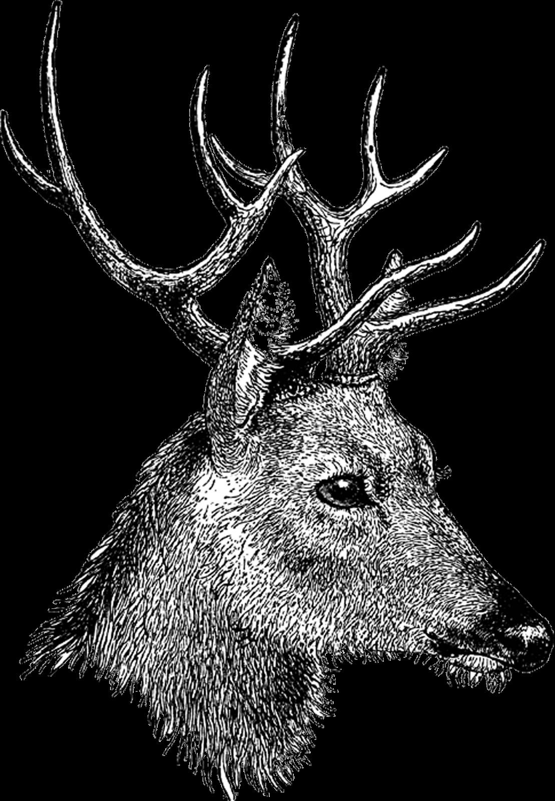 Free Vintage Digi Stamp Deer Head Png 1 109 1 600 Pixels Clip Art Vintage Digital Stamps Vintage Printables