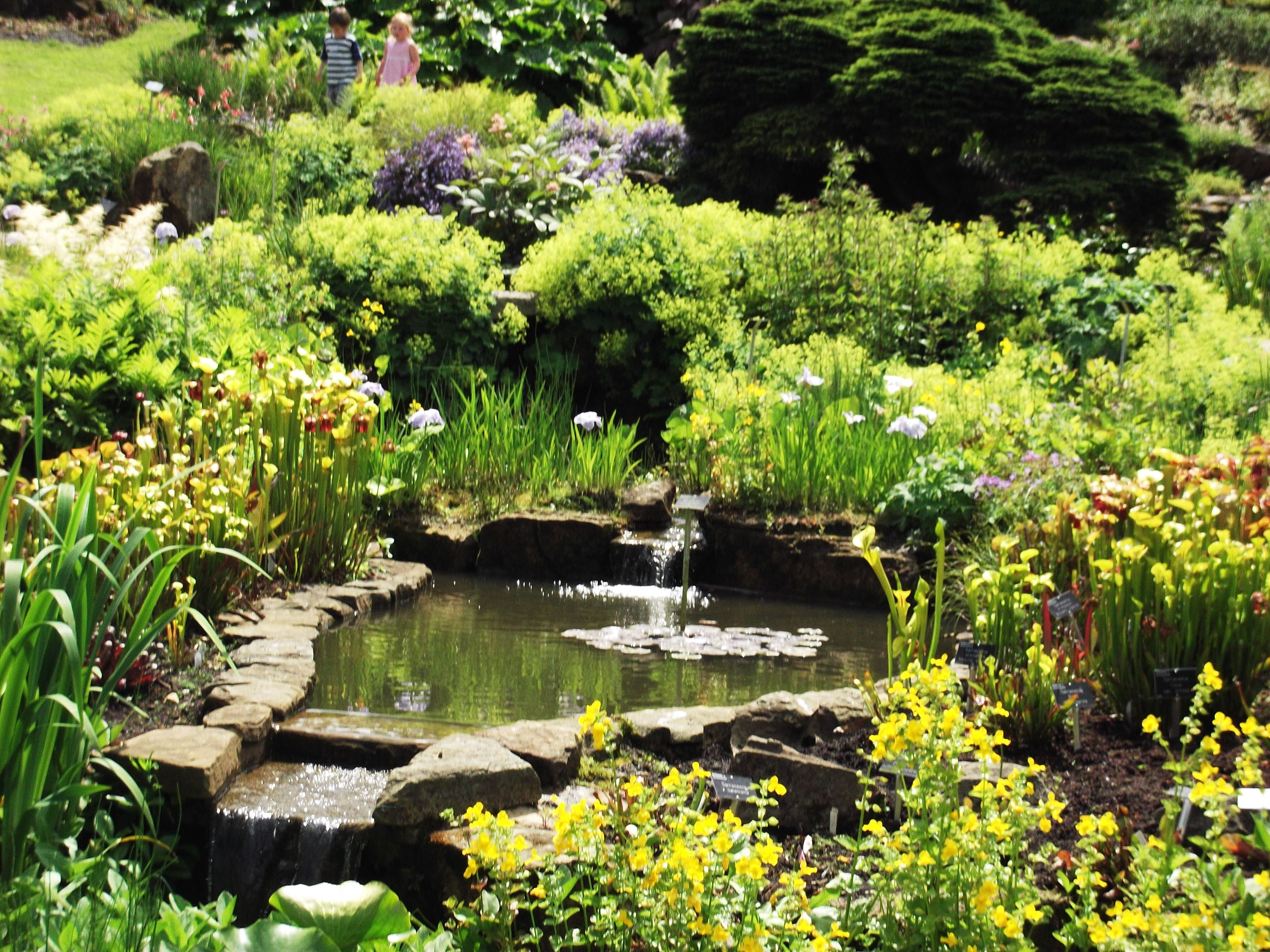 Small pond surrounded by shrubs at RHS Garden Wisley ...