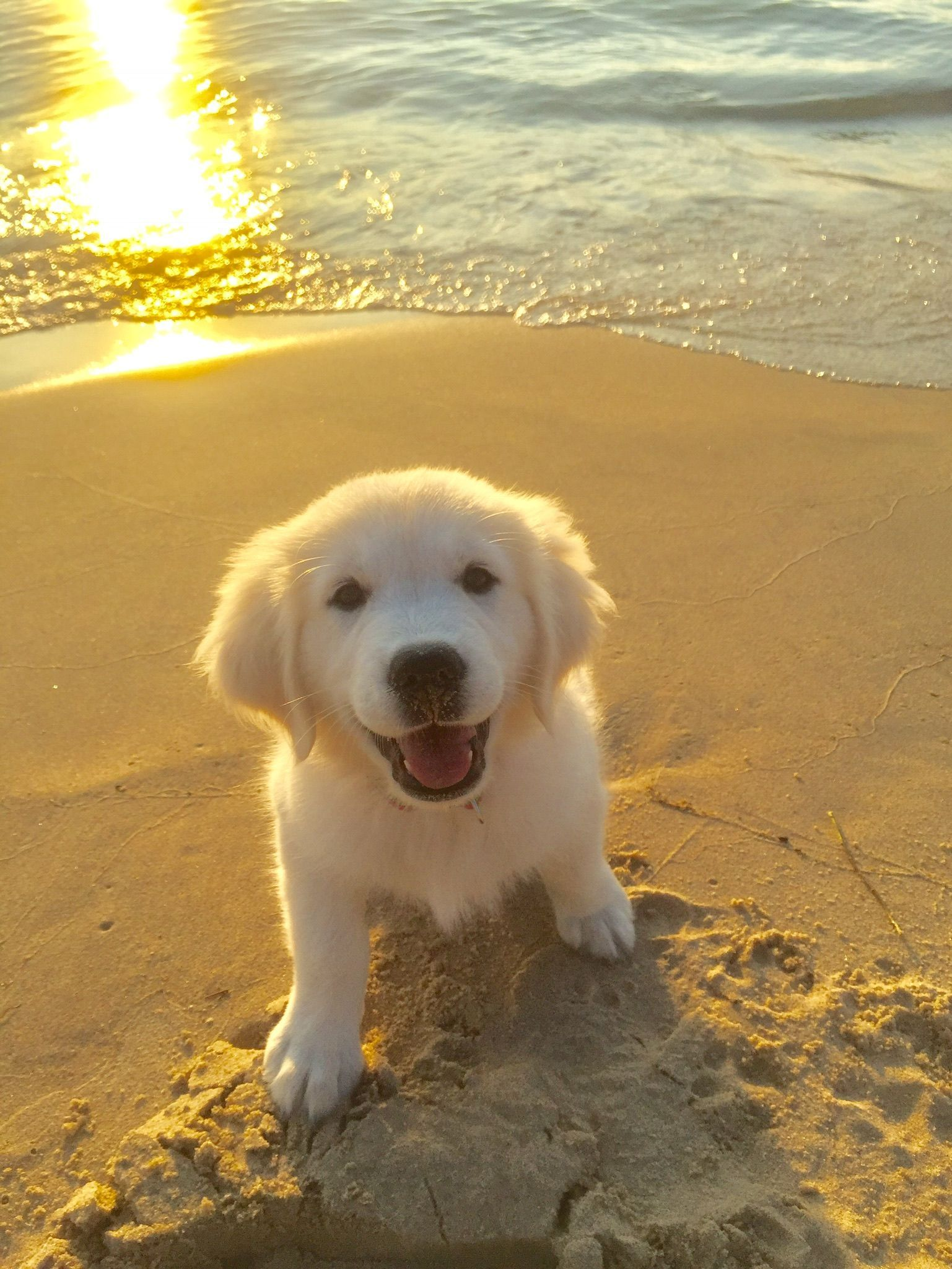 Goldenretriever Cute Animals Cute Baby Animals Girl And Dog