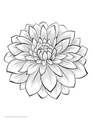 Aneka Gambar Mewarnai Gambar Mewarnai Bunga Dahlia Untuk Anak Paud
