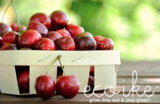 eco ike: eat organic