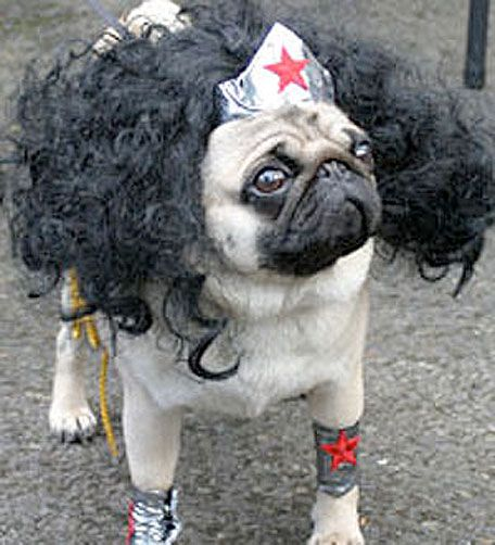 Sure Animals In Costumes Are Adorable But Pugs Always Seem To Have The Most Awesome Around