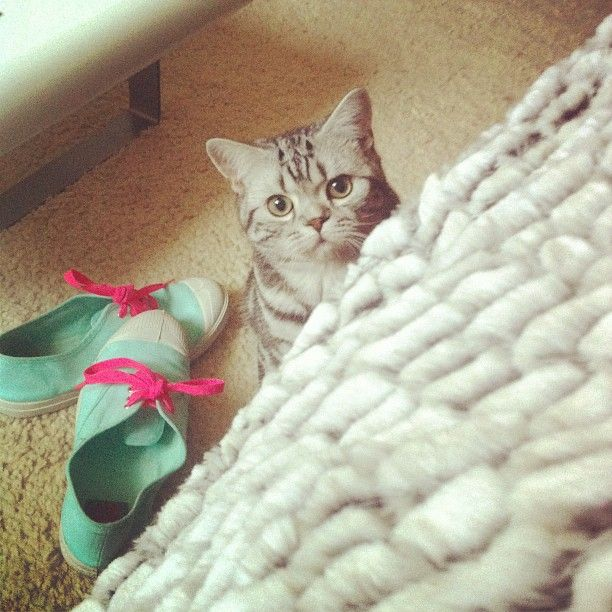Instagram Edition Aout Septembre Curious Cat Cats Animals