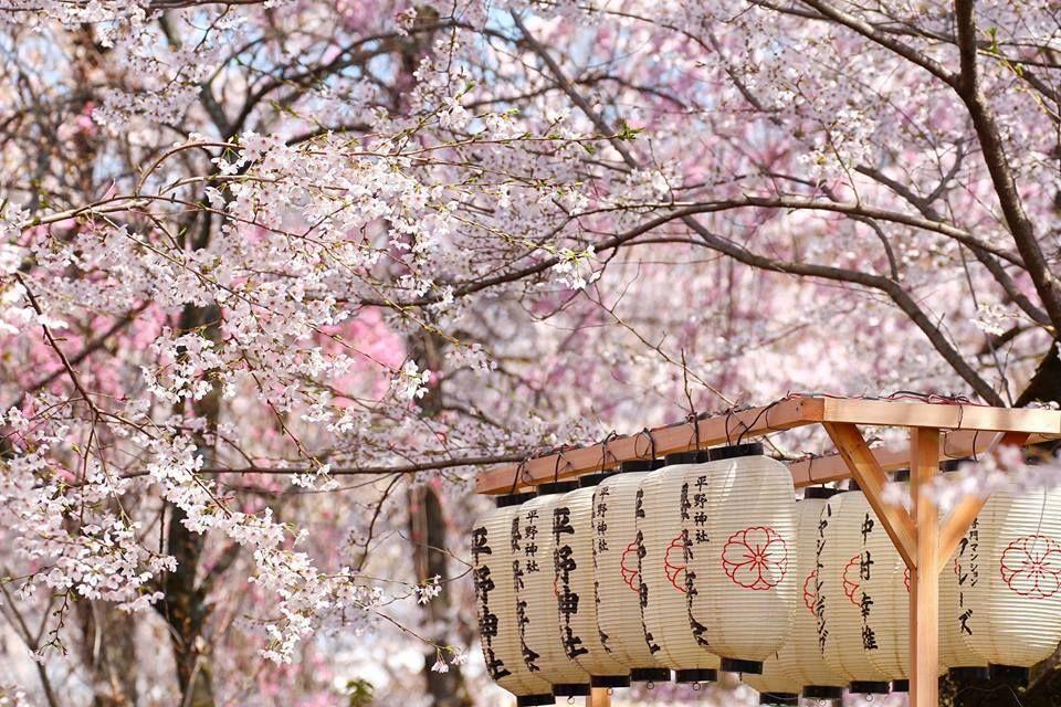 Pringtime In Japan