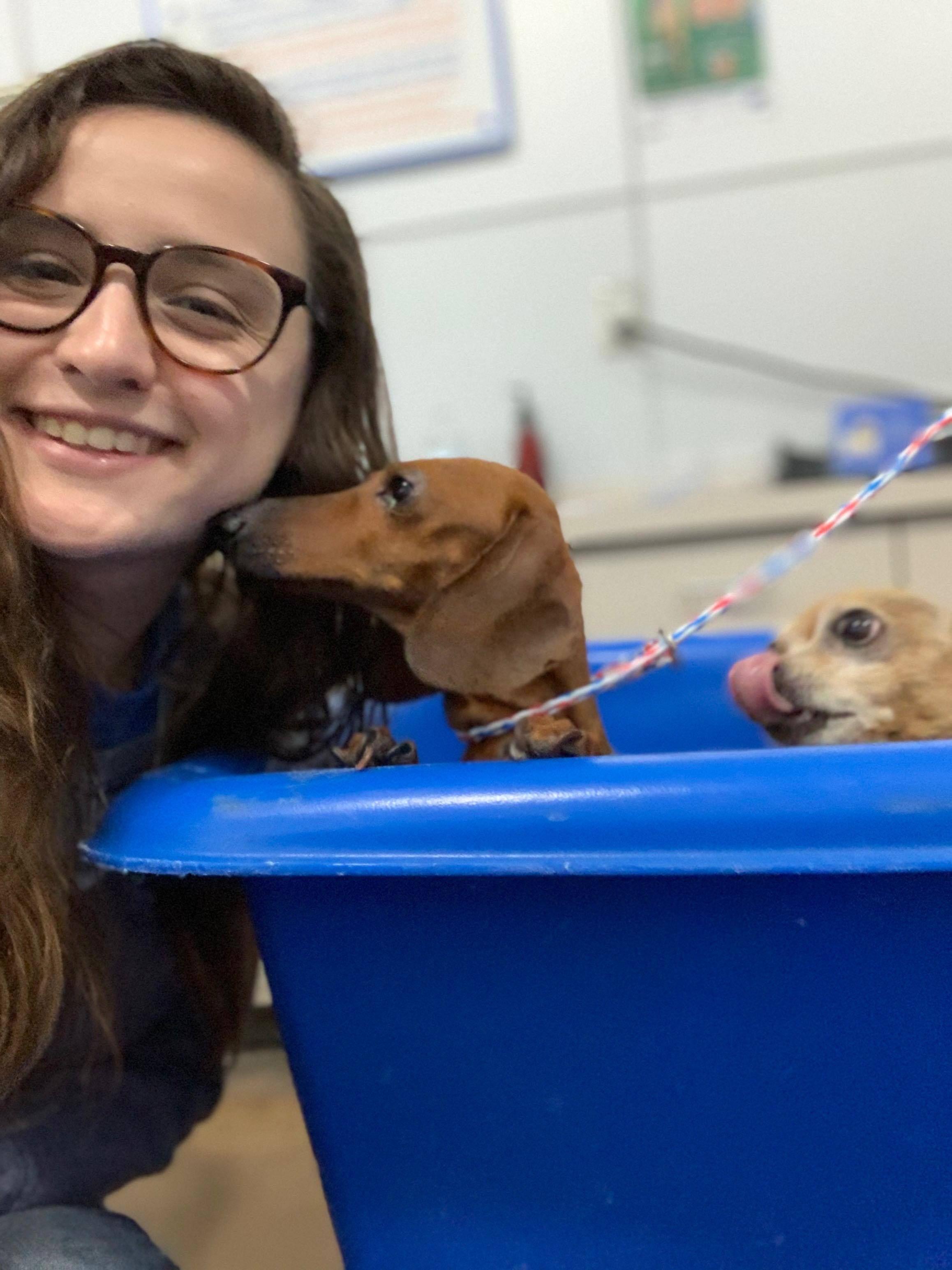 Adopt Yennefer Of Vengerberg On Animal Rescue Dachshund Mix