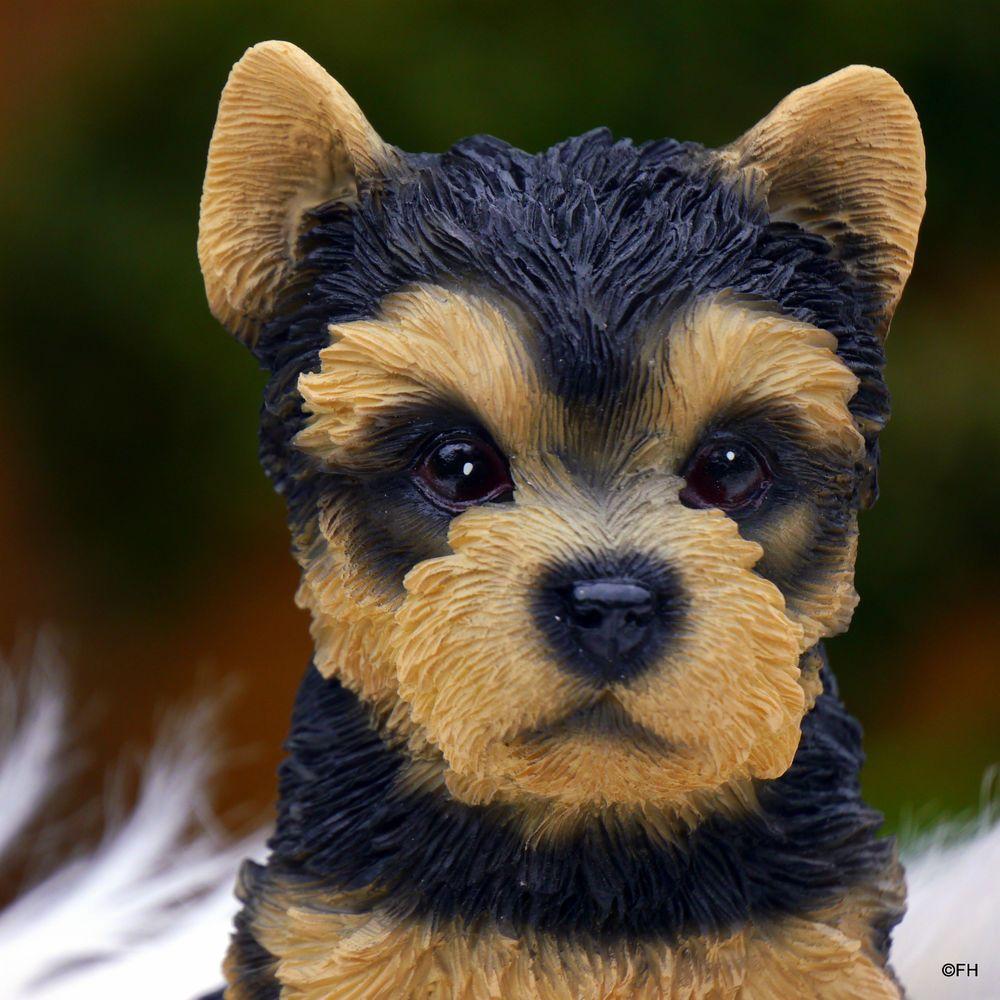 yorkshire maus.... (mit Bildern) Hunde garten, Hunde