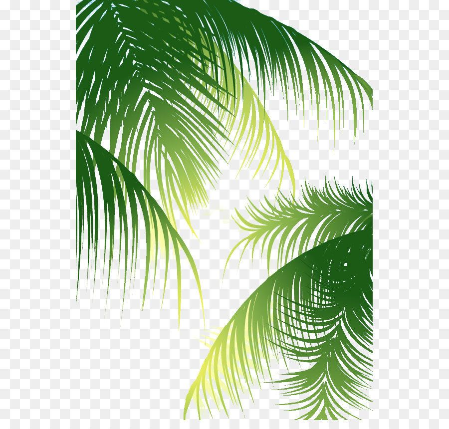 Coconut Arecaceae Euclidean Vector Green Palm Leaves Background Png Is About Is About Plant Leaf Pattern Arecales Tree Coconut Arecaceae E Daun Seni Png