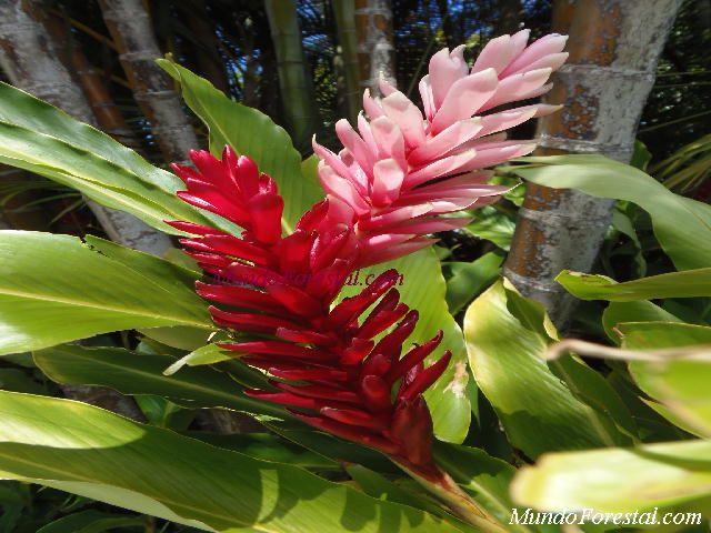 Plantas ornamentales de flores for Vivero plantas exoticas
