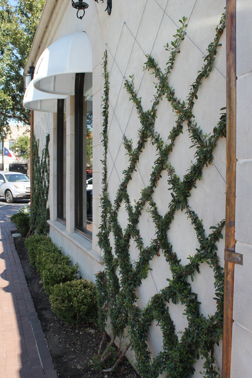Criss Cross Some Wires Or Thread Against The Side Of House For A Small Leafed Ivy Trellis Could Probably Make An Intricate Design If You Take Time