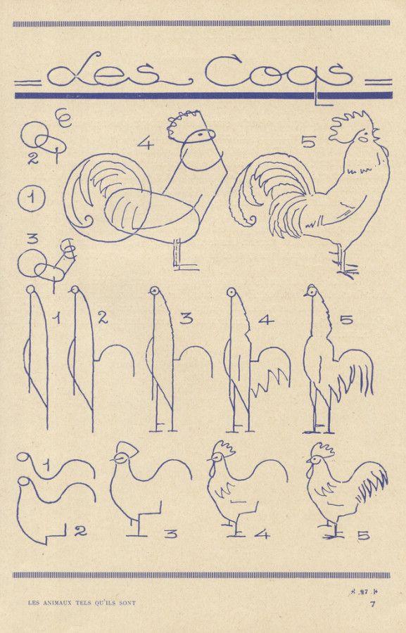 Guias para aprender a dibujar animales | Gallos, Dibujar y Dibujo