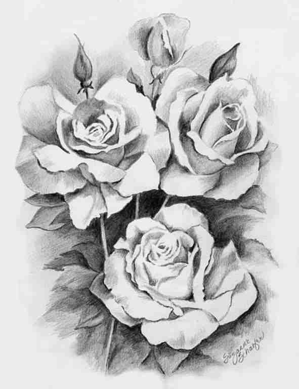 Shaded Rose Drawing Pencil Drawings Drawings Plant Drawing