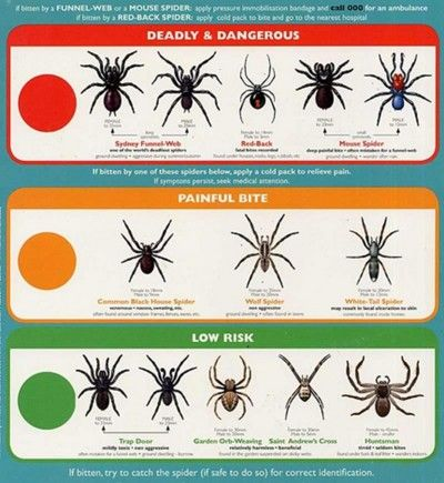 Spiders Spider Identification Types Of Spiders Anatomy Life