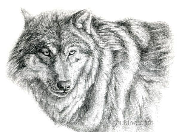 Grey Wolf - portrait by =sschukina on deviantART   wilk   Pinterest