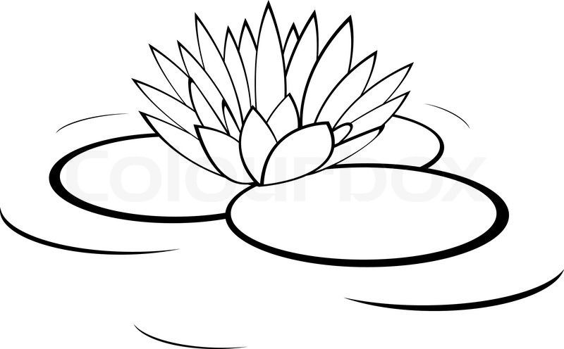 Gallery For > Black And White Water Lily Drawing | Water ...