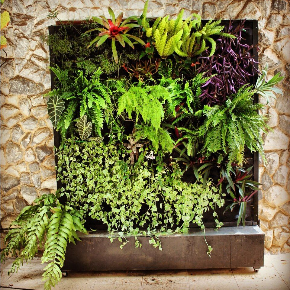 Garden: Exposed Stone Wall Design Plus Awesome Vertical Indoor Garden Idea  With Fern Family Plants: Charming Indoor Garden Ideas To Beautify Your Room