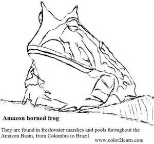 Amazon Horned Frog Coloring Page Sketch Template With Images