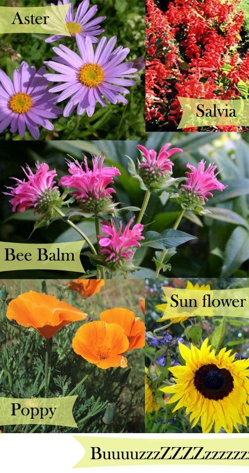 Plant a bee garden next to your vegetable garden.