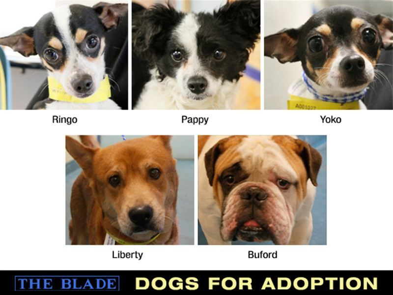 OHIO 5/25/2013 Toledo Blade Dogs remain available