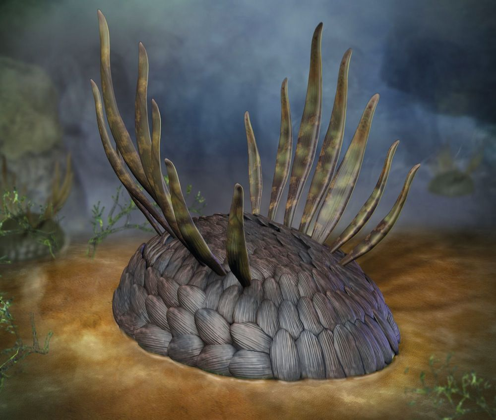 Wiwaxia may have been related to today's mollusks. Copyright Quade Paul - The Weird Youth of the Animal Kingdom (Slide Show) – Phenomena: The Loom