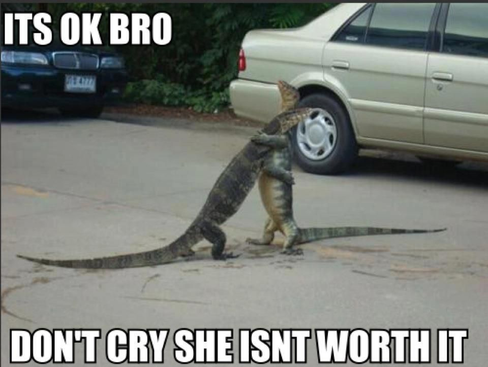 Its Ok Bro Funny Pictures! Funny animal memes, Funny