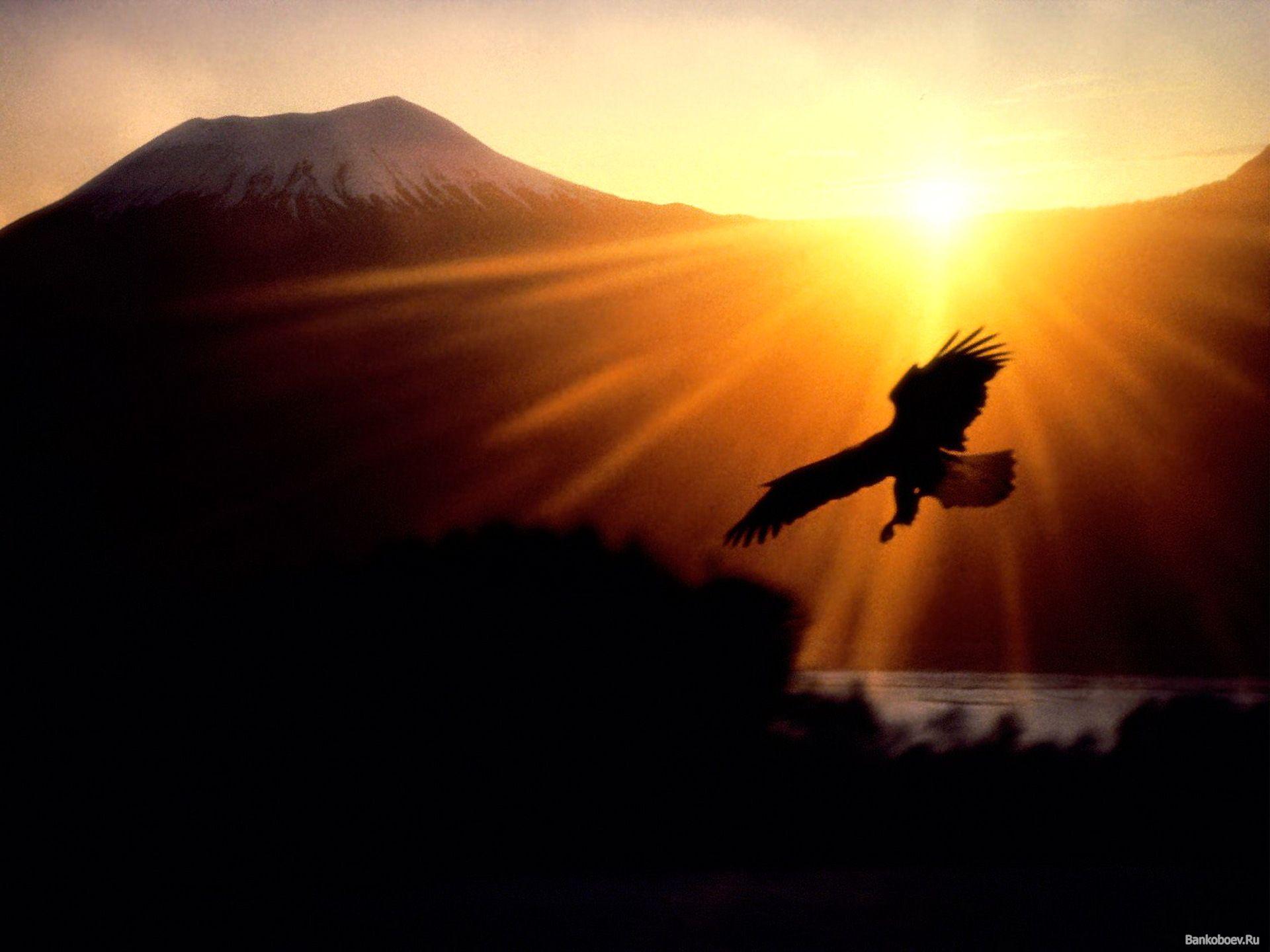 wallpapers adler hd der fliegt in den himmel bei sonnenuntergang x